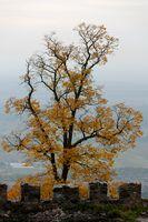 1 BA Herbst auf der Burg.jpg