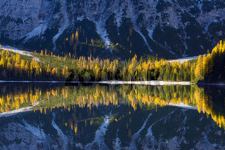 Mountainside with colorful larch trees reflecting in lake