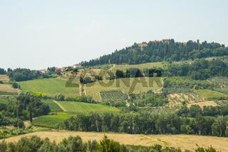 Ländliche Gegend mit Feldern und Reben, Toskana, Italien