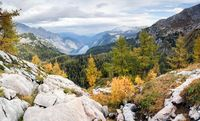 Colorful larch trees with mountains and lake. National Park Berchtesgaden.