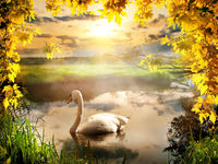 Swan in autumn