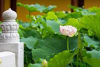 buddha lotus flower
