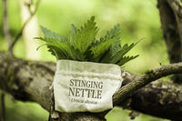 Stinging Nettle (Urtica Dioica)