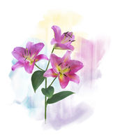 Pink Lily Flowers watercolor