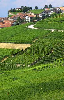 Blick auf die Weinbergterrassen von Rivaz im Unesco-Weltnaturerbe Lavaux