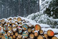 Holzpolter im Winter
