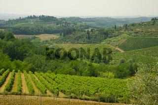 Ländliche Gegend mit Weinbergen, Toskana, Italien