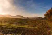 Feld am frühen Morgen