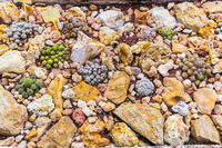Succulents and cactus blooming flowers stone garden