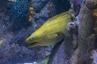 yellow head moraine  fish  underwater sea life