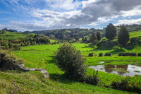 New Zealand countryside landscape