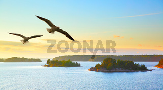 Water landscape with flying seagulls