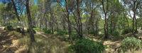 Mediterranean Forest Panorama