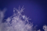 snowflake macro photo