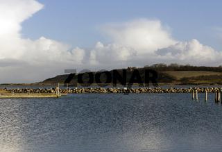 Harbour entrace landscape