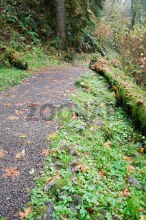 Rain Forest Trail Wet Gravel Lush Green Woods