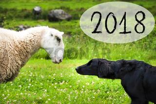 Dog Meets Sheep, Text 2018