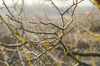 Bare branches in cold