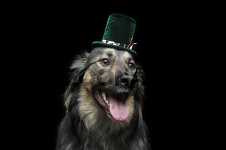 beautiful dog in hat isolated on black