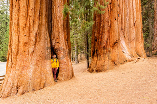 Tourist with backpack hiking in Sequoia National Park