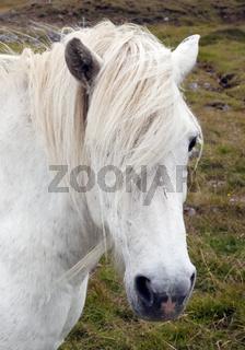 IS_Pferd_02.tif
