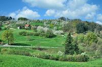 D--Frühling im Schwarzwald.jpg