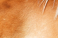 Close up horse skin concept for background