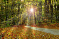 rays of sunlight through the forest in fall season