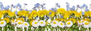 Real spring flowers border