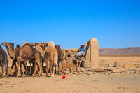Ait Saoun, Morocco - February 23, 2016: Berber man with camels at the well takes water, Morocco