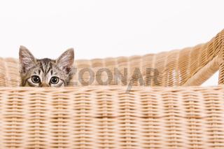 Kätzchen auf einem Sessel - kitty on a chair