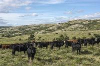 True Uruguay - Windmills, green technologies and livestock, Cathedral Hill in the Maldonado Department