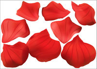 Red Rose Petal Collection