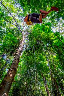 Guy swinging on liana plant