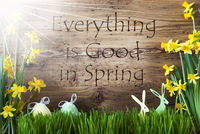 Sunny Easter Decoration, Gras, Text Everything Is Good In Spring