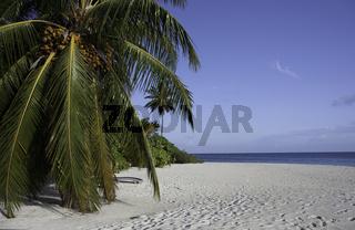 White Beach, Plam tree, Blue Sky and the ocean, Maldives