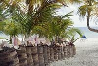 Way to Tropical beach
