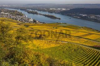 herbstliche Weinberge bei Rüdesheim am Rhein, Weinstadt in Deutschland