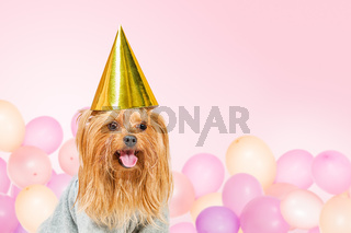 Funny party dog