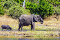 Watering large animals in the Okavango Delta