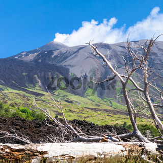 broken tree in hardened lava flow on slope of Etna