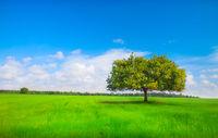 beautiful green tree on meadow