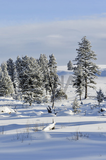 Winter, Schnee, Sonne... Yellowstone Nationalpark *Nordamerika*