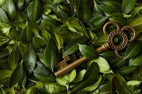 Green leaves and key