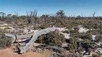 Wave Rock, Western Australia
