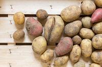 Gesunde frische Bio Kartoffeln in einer Holzkiste