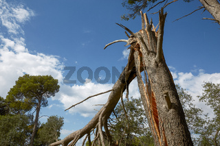 Storm damage and broken tree in the forest