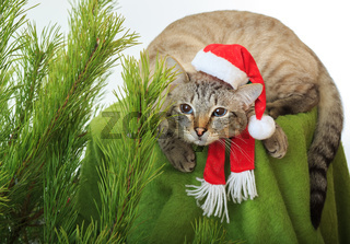 Funny cat in a Santa Claus hat under Christmas tree