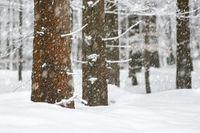 Winterwald, Nahaufnahme