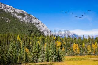 Flock of migratory birds in the sky